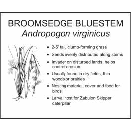 <i>Andropogon virginicus</i> : BROOMSEDGE BLUESTEM