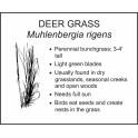 <i>Muhlenbergia rigens</i> : DEER GRASS