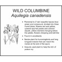 <i>Aquilegia canadensis</i> : WILD COLUMBINE