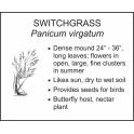 <i>Panicum virgatum</i> : SWITCHGRASS