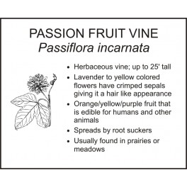<i>Passiflora incarnata</i> : PASSION FRUIT VINE