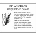 <i>Sorghastrum nutans</i> : INDIAN GRASS