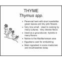 <i>Thymus spp.</i> : THYME