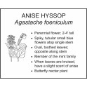 <i>Agastache foeniculum</i> : ANISE HYSSOP