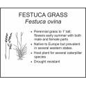 <i>Festuca ovina</i> : FESTUCA GRASS