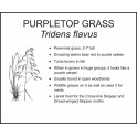 <i>Tridens flavus</i> : PURPLETOP GRASS