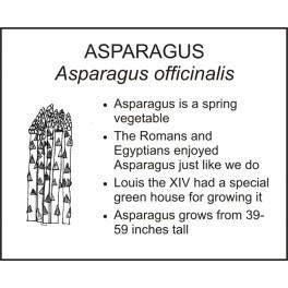 <i>Asparagus officinalis</i> : ASPARAGUS