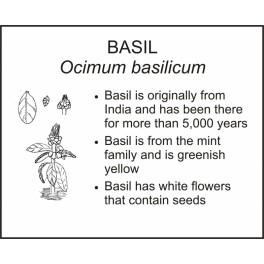 <i>Ocimum basilicum</i> : BASIL