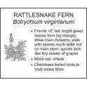 <i>Botrychium virginianum</i> : RATTLESNAKE FERN
