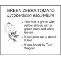 <i>Lycopersicon esculentum</i> : GREEN ZEBRA TOMATO