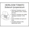 <i>Solanum lycopersicum</i> : HEIRLOOM TOMATO