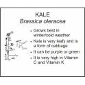 <i>Brassica oleracea</i> : KALE