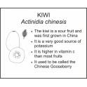 <i>Actinidia chinesis</i> : KIWI