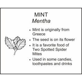 <i>Mentha</i> : MINT