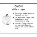 <i>Allium cepa</i> : ONION