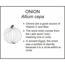 <i>Allium cepa</i> : ONION