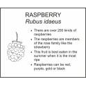 <i>Rubus idaeus</i> : RASPBERRY