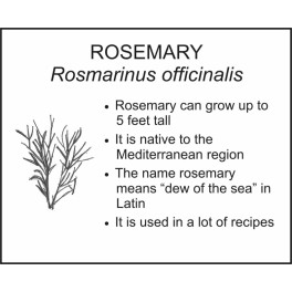 <i>Rosmarinus officinalis</i> : ROSEMARY