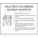 <i>Aquilegia canadensis</i> : WILD RED COLUMBINE