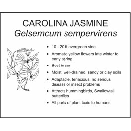 <i>Gelsemcum sempervirens</i> : CAROLINA JASMINE