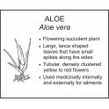 <i>Aloe vera</i> : ALOE