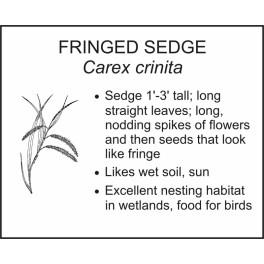 <i>Carex crinita</i> : FRINGED SEDGE