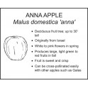 <i>Malus domestica 'anna'</i> : ANNA APPLE
