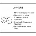 APRIUM