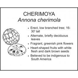 <i>Annona cherimola</i> : CHERIMOYA