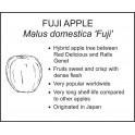 <i>Malus domestica 'Fuji'</i> : FUJI APPLE