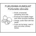 <i>Fortunella obovata</i> : FUKUSHMA KUMQUAT