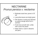 <i>Prunus persica v. nectarina</i> : NECTARINE