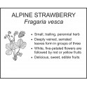 <i> Fragaria vesca </i> : ALPINE STRAWBERRY