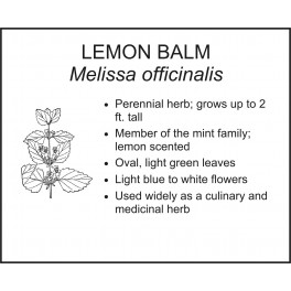 <i> Melissa officinalis </i> : LEMON BALM