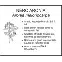 <i> Aronia melonocarpa </i> : NERO ARONIA