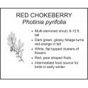 <i> Photinia pyrifolia </i> : RED CHOKEBERRY