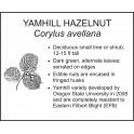 <i> Corylus avellana </i> : YAMHILL HAZELNUT