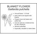 <i> Gaillardia pulchella </i> : BLANKET FLOWER