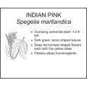 <i> Spegelia marliandica </i> : Indian Pink