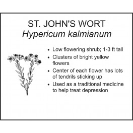 <i> Hypericum kalmianum </i> : St. Johns Wort