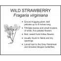 <i>Fragaria virginiana</i> : WILD STRAWBERRY