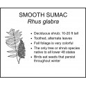 <i> Rhus glabra </i> : SMOOTH SUMAC