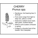 <i> Prunus spp. </i> : CHERRY