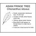 <i> Chionanthus retusus </i> : ASIAN FRINGE TREE