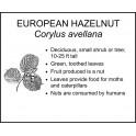 <i> Corylus avellana </i> : EUROPEAN HAZELNUT