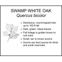 <i> Quercus bicolor </i> : SWAMP WHITE OAK