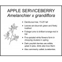 <i> Amelanchier x grandiflora </i> : Apple Serviceberry