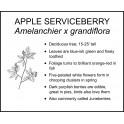 <i> Amelanchier x grandiflora </i> : Apple Serviceberry