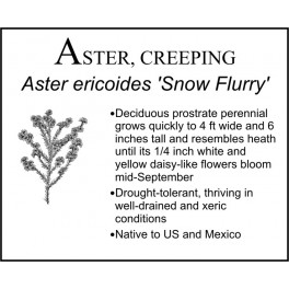 A: Aster