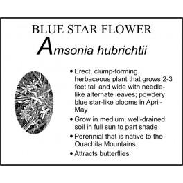 A: Amsonia